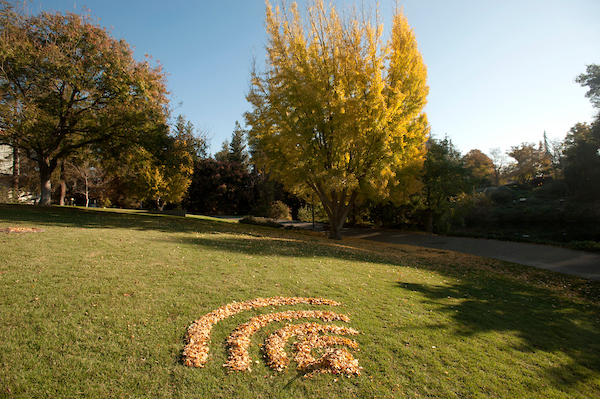 Wifi symbol made out of fallen leaves brown in a grass field with trees in the background
