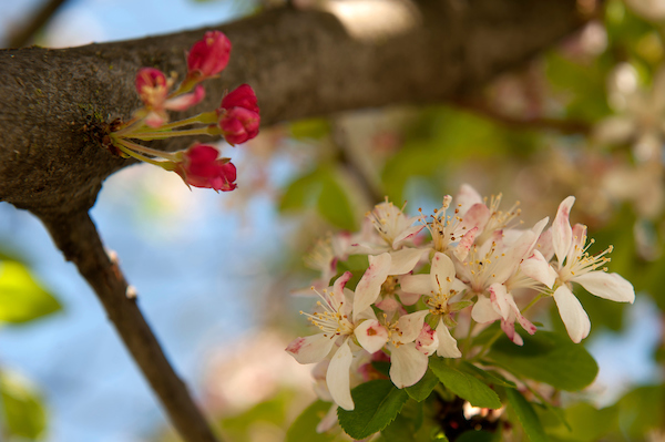 Light and Dark Pink Flowers on Tree